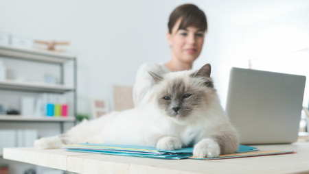 Woman with cat lying on desk